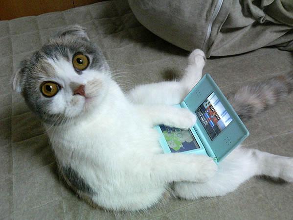 U slučaju nedostatka sadržaja, fotografije mačaka su tajno oružje!