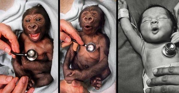 Izrazi lica ne razlikuju se mnogo, čak ni kad je riječ o ljudima i gorilama