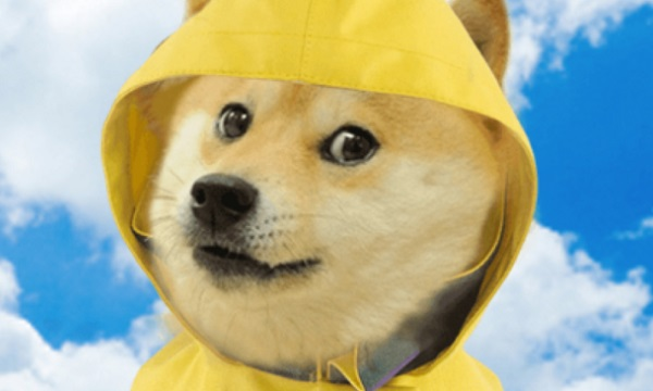 Doge Weather