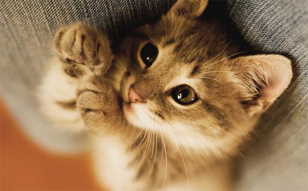 Mačke jesu slatke, no da li je to zaista najbolji način da animirate i angažujete vašu publiku?