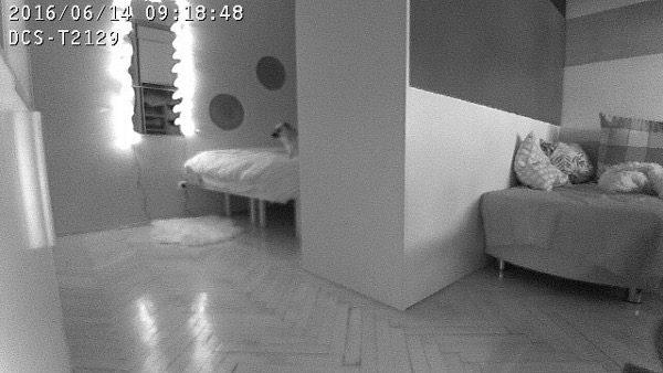Da, ona mrlja na krevetu je pseća njuškica.