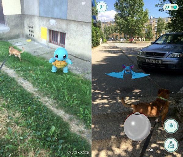 Love na Pokémone i šetnja psa. Njušim Squirtle šalu.