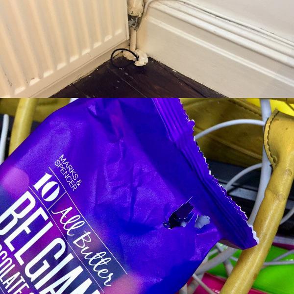 Dokaz A: Rupa iz koje je glodavac iskočio, potom uskočio i tako nekoliko puta po noći. Vješto sam ju začepila kartonskom vrećicom. Dokaz B: Načeti, dotad neotvoreni keksi!